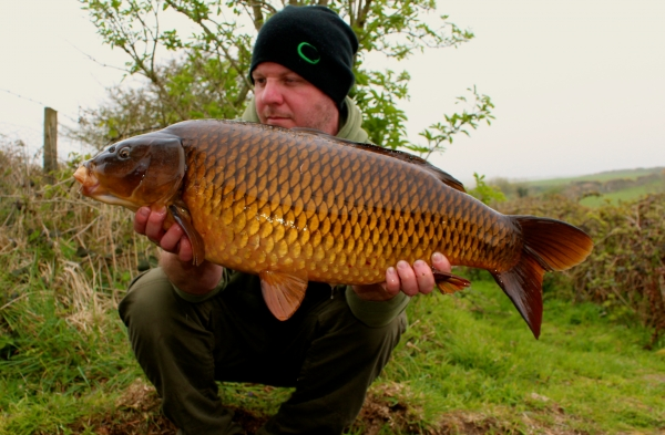 A lovely scale perfect common from the far side spot