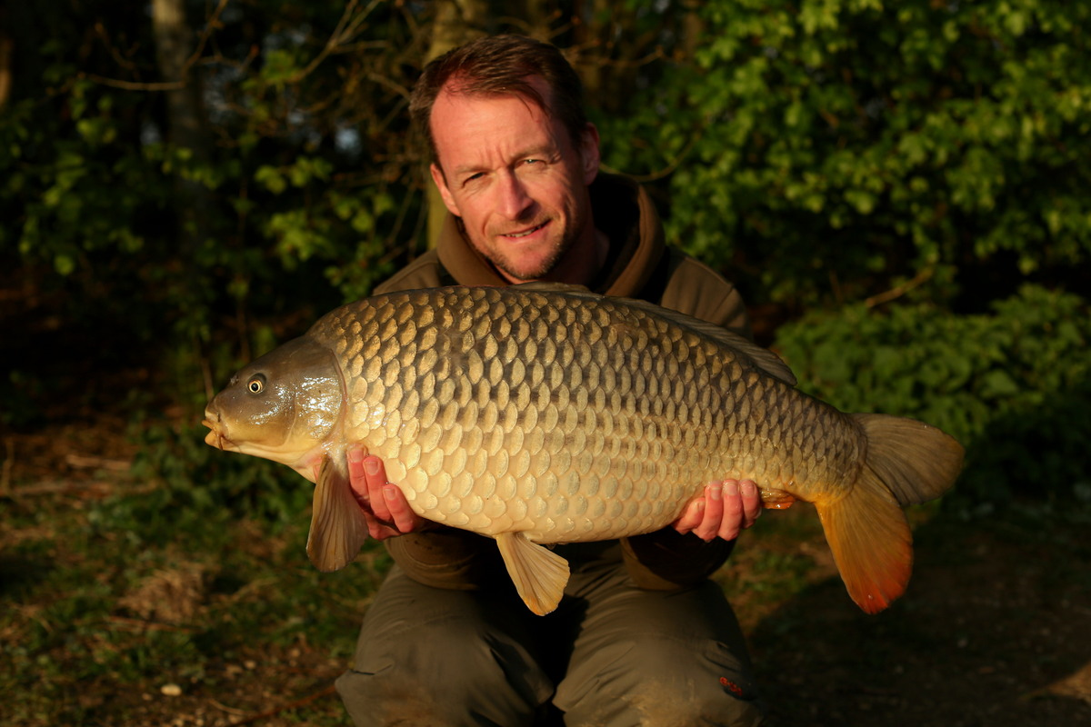 A quick solid bag evening bite and a clean B1 common