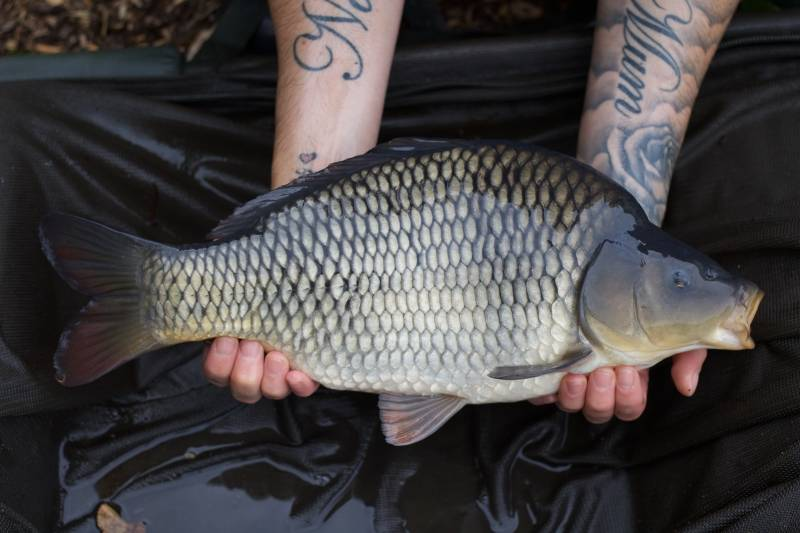 Home grown common!