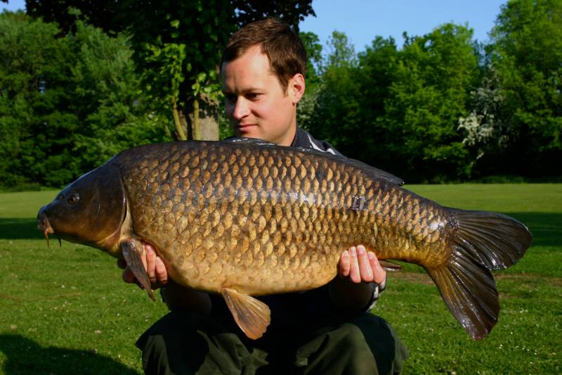 A lovely carp attracted to a food source bait