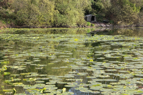The lilly festoon reservoir!