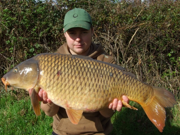This carp couldn't resist a small Mainline pop-up hovering above a mouthful of pellet!