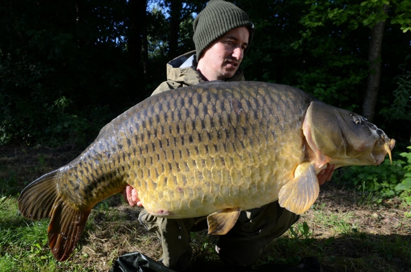 52lb Common from the river Seine